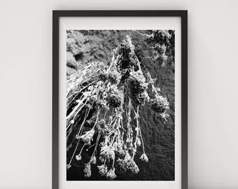 Black and White Photography, Black and White Wall Art, Printable, Printable Art, Explore Print, Decor, Dried Flowers, Cappadocia, Turkey