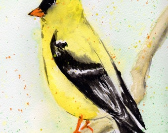 Gold Finch [030]