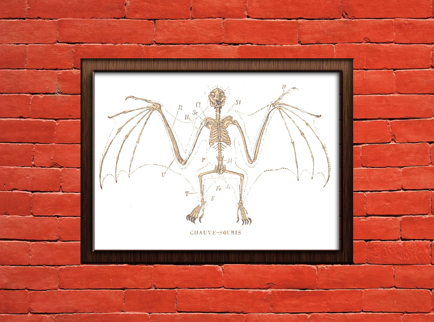 Chauve-Souris : Bat skeleton poster print. Wall art.