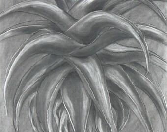 Aloe charcoal/eraser drawing
