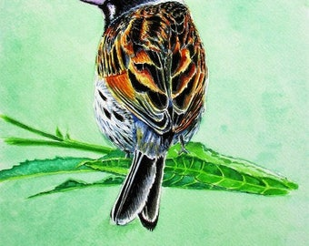 Limited Edition Fine Art Giclée Print by Martin Romanovsky:  Reed Bunting #02/50