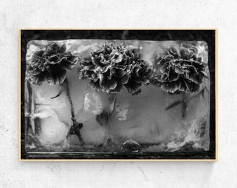 Black and White Frozen Flowers print, carnation, download