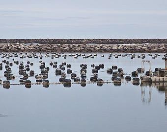 Oregon Coast Oyster Farm Photo Wall Art