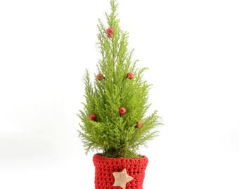 Christmas fir with a potted plant