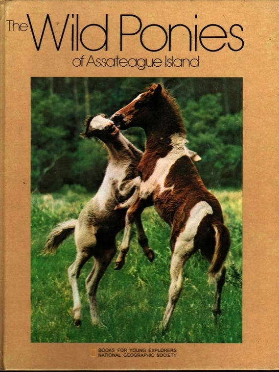 The Wild Ponies of Assateague Island - Diane Grosvenor - Photographic Illustrations - 1975 - Vintage Horse Book
