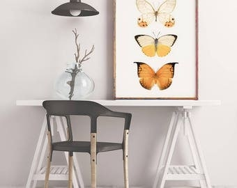 Insect Art, Wall Art Print, Butterfly Print, Modern Photography, Orange, Yellow, Butterfly Art, Large Wall Art Print, Insect Wall Art Print