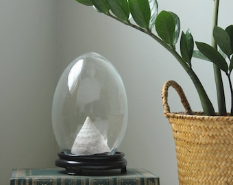 Vintage egg-shaped glass dome with wooden stand - and sea shell
