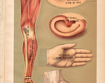 Five OVERLAYS of Eye, Ear, Hand, Foot, Leg 1901 MANIKIN Illustrations of Internal and External Anatomy