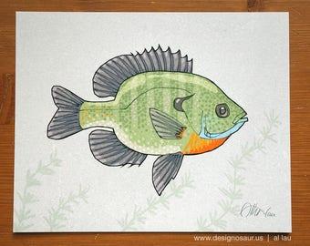 Bluegill Sunfish (8 x 10)