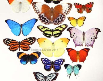 Realistic Paper Butterflies - Cut outs - Set of 15 paper butterfly cut outs