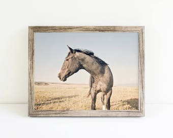Modern Color Horse Print, Equine Photography, Farmhouse Decor, Physical Print