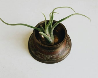 Vintage Etched Brass Air Plant Holder - Incense Burner from India - Bohemian Modern Eclectic Decor