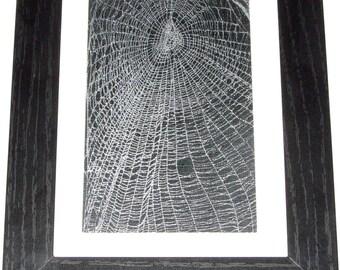 Real framed preserved spider web orb weaver matted black wood frame 8.75in x 6.5in