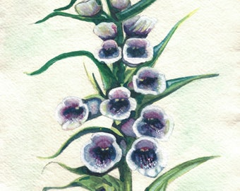 Foxgloves Greetings Card