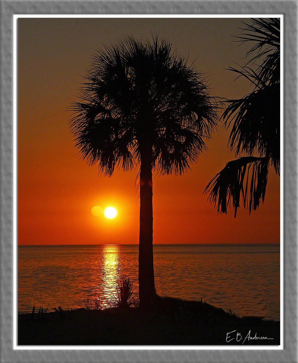 Palm Tree At Sunset Beach Tarpon Springs Florida