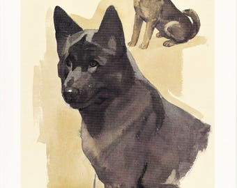 Akita Inu large Japanese guard dog breed vintage print illustration gift for dog lover owner portrait by Willy E. Bär  8x11.5 inches