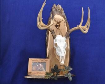 European Mount ~ Deer Hunting Gift ~ Deer Hunting ~ Deer Skull Mount ~ Gift For Hunter ~ Antler Mount ~ Antler Plaque ~ Child's First Deer ~
