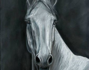 White Horse Original Pastel Painting
