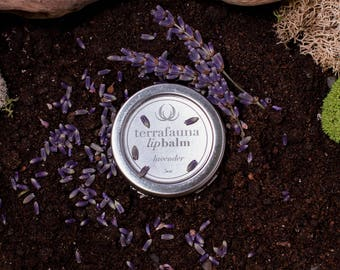 Lavender LipBalm