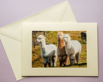 Teesdale Alpacas - all occasion greeting card