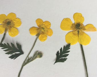 Real pressed flowers,MIX,Floral art,scrapbooking,ready for frame