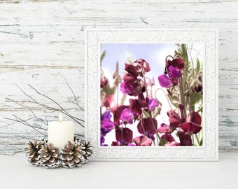 Digital Download Floral Print Flower Photography Botanical Print Fine Art Photography Square Wall Art Nature Sweet Pea Purple Photography