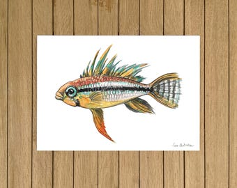 Banded Apisto, Tropical Fish, Giclée Print, Watercolor illustration, A3 A4 or A5 size
