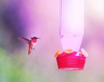 Cheap Humming Bird Download!
