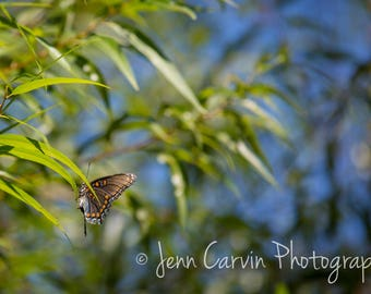 Virginia Beach, VA - Butterfly On The Edge - Photography - Landscape - Fine Art - Multiple Sizes