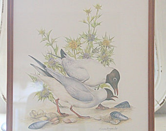 Vintage Framed Seagull Print Under Glass, Seagull Drawing, Wooden Frame, Ilustrater Dieter Boger