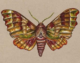 "Moth orginal painting // Size A5 - 5.8"" x 8.3"""