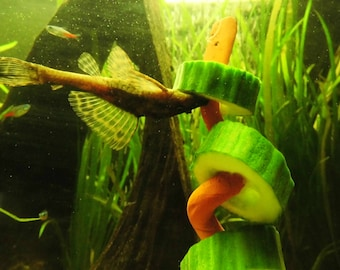 2 feed, cucumber corkscrew, Aquarium decoration, Aquarium, catfish caves