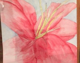 Red lily-watercolor pencil on watercolor paper