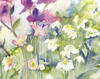 Helebores Watercolour Print