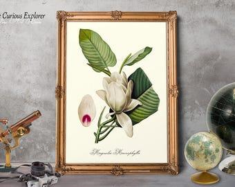 Magnolia Art Print, Magnolia Prints, Magnolia Home Decor, Magnolia Cottage Art, Magnolia Bloom Decor, Magnolia Plant Art - E10m2