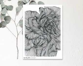 Rose garden - Drawing Illustration hand - Botanic poster - print in limited and numbered - monocotyledonous