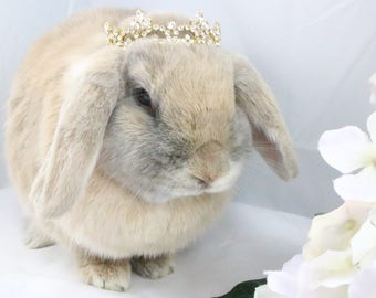 Gold Rhinestone Crown / Gold crown for rabbits, dogs and small pets