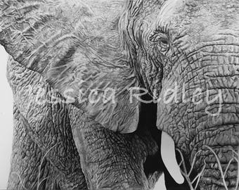 ORIGINAL - A3 ELEPHANT in charcoal and pen