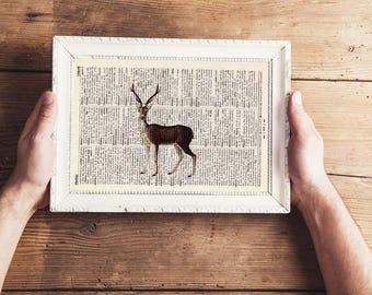 Pressure - deer No.. 5 - antique book page