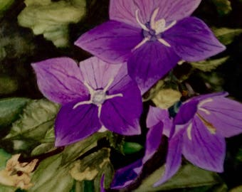 PURPLE water colour painting of campanula