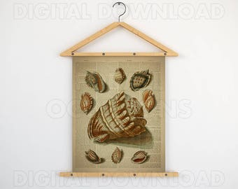 Beach digital print, Vintage print art, Shell printables, Dictionary, Antique nautical, Instant downloads, See shell wall art, 11x14 poster