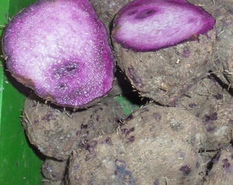 50  Seeds Dioscorea Alata ,Purple yam, Edible Purple Yam