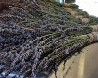 Lavender Seeds; Organic lavender seeds; aromatherapy herbs seeds;