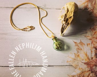 Lucky Rabbit Bones in a little green Glass Bottle Pendant with Gold Plated Chain, Real Genuine Wild Rabbit Hare Bones, Taxidermy Macabre