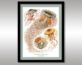 Ernst Haeckel ~ Discomedussea. Scheibenquallen ~ Art Forms of Nature ~ Reproduction Art Print ~ FREE Shipping to UK Customers.