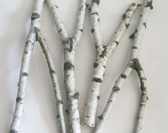 Forked Birch Branches, Four Birch Sticks, Forest Supplies, Natural Decor