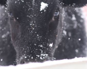 Hes just not sure about this snow....