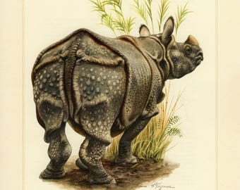 Vintage lithograph of the Indian rhinoceros from 1956