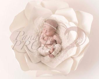 digital backdrop - newborn photography - ivory flower nest