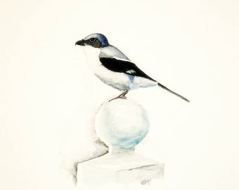 Bird art/Loggerhead shrike watercolour/Bird painting/Giclee print/Nursery art/Home and office decor.